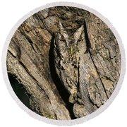 Eastern Screech-owl Otis Asio Wild Texas Round Beach Towel