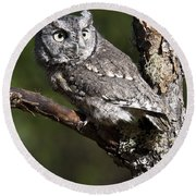Eastern Screech-owl Otus Asio Round Beach Towel
