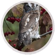 Eastern Screech Owl Red And Gray Phases Round Beach Towel