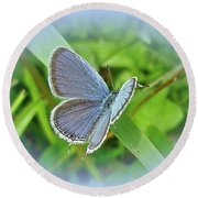 Eastern-tailed Blue Butterfly - Cupido Comyntas Round Beach Towel