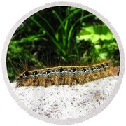 Eastern Tent Caterpillar Round Beach Towel