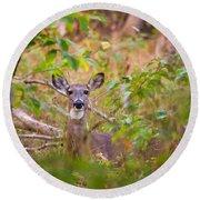 Eastern Whitetail Deer Round Beach Towel