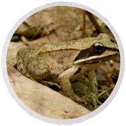 Eastern Wood Frog Round Beach Towel