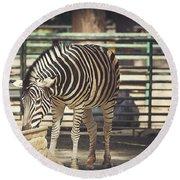 Eating Zebra Round Beach Towel