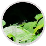 Ebony Jewelwing Male Round Beach Towel