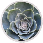 Echeveria With Water Drops Round Beach Towel