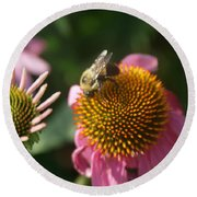 Echinacea And Bee Round Beach Towel