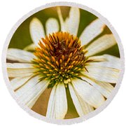 Echinacea Fading Beauty Round Beach Towel