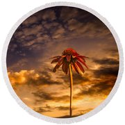 Echinacea Sunset Round Beach Towel by Bob Orsillo