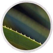 Edge Of A Sotol Leaf Round Beach Towel