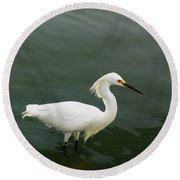 Egret In Water Round Beach Towel