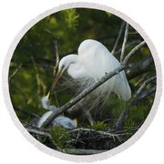 Louisiana Egret With Babies In Swamp Round Beach Towel