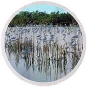 149838-egrets Feeding, Everglades Nat Park  Round Beach Towel