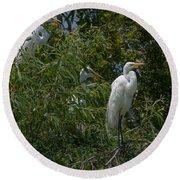 Egrets In Tree Round Beach Towel