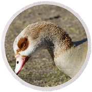 Egyptian Goose Profile Round Beach Towel