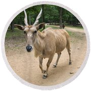 Eland Antelope Out In The Open Round Beach Towel