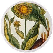 Elecampane Round Beach Towel by Elizabeth Blackwell