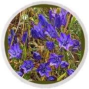 Elegant Brodiaea In Tilden Regional Park-california   Round Beach Towel