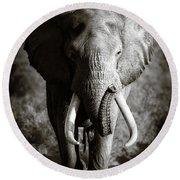 Elephant Bull Round Beach Towel