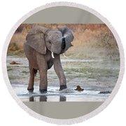 Elephant Calf Spraying Water Round Beach Towel