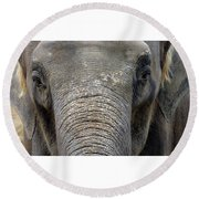 Elephant Close Up 1 Round Beach Towel
