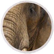 Elephant Close Up Round Beach Towel