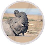 Elephant Curling Trunk Round Beach Towel