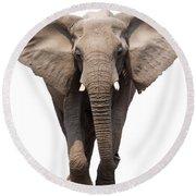 Elephant Isolated Round Beach Towel