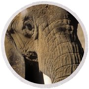 Elephant Portraint Round Beach Towel