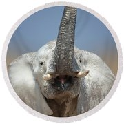 Elephant Portrait Round Beach Towel