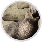 Elephant Seal Round Beach Towel