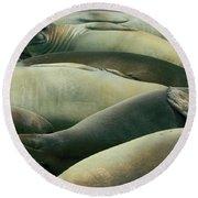 Elephant Seal Pups Round Beach Towel