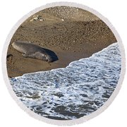 Elephant Seal Sunning On Beach Round Beach Towel