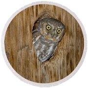 Elf Owl Round Beach Towel