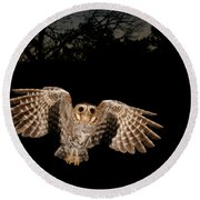 Elf Owl Round Beach Towel by Scott Linstead
