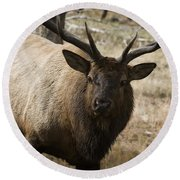 Elk-animals-image Round Beach Towel
