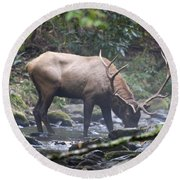 Elk Drinking Water From A Stream Round Beach Towel