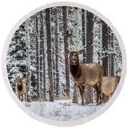 Elk In Jasper Round Beach Towel