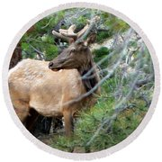Elk In Rocky Mountain National Park Round Beach Towel