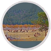 Elk Near Cub Lake Trail In Rocky Mountain National Park-colorado  Round Beach Towel
