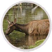 Elk Pictures 36 Round Beach Towel