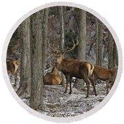 Elk Pictures 45 Round Beach Towel