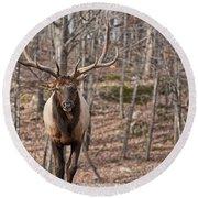 Elk Pictures 86 Round Beach Towel