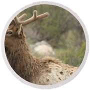 Elk Sky Gaze Round Beach Towel