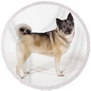 Elkhound Dog Round Beach Towel