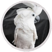 Elvis The Cockatoo II The Profile Shot Round Beach Towel