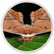 Emperor Gum Moth - 6 Inch Wing Span Round Beach Towel