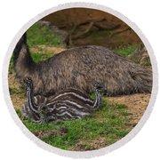 Emu And Chicks Round Beach Towel