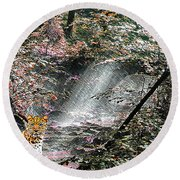Enchanted Forest - Featured In Wildlife Group Round Beach Towel