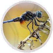 Enchanting Dragonfly Round Beach Towel